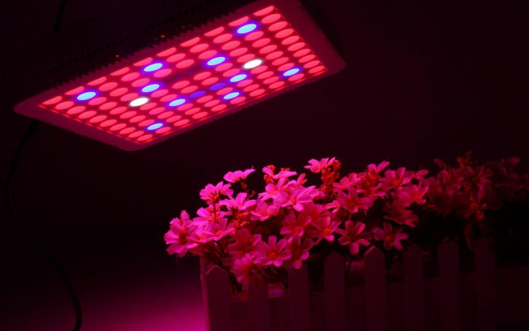نورپردازی ال ای دی و تأثیر آن بر رشد گیاهان، باغداران و جهان